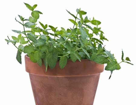 The 6 best plants for a healthy office the loszach blog - The best office plants ...